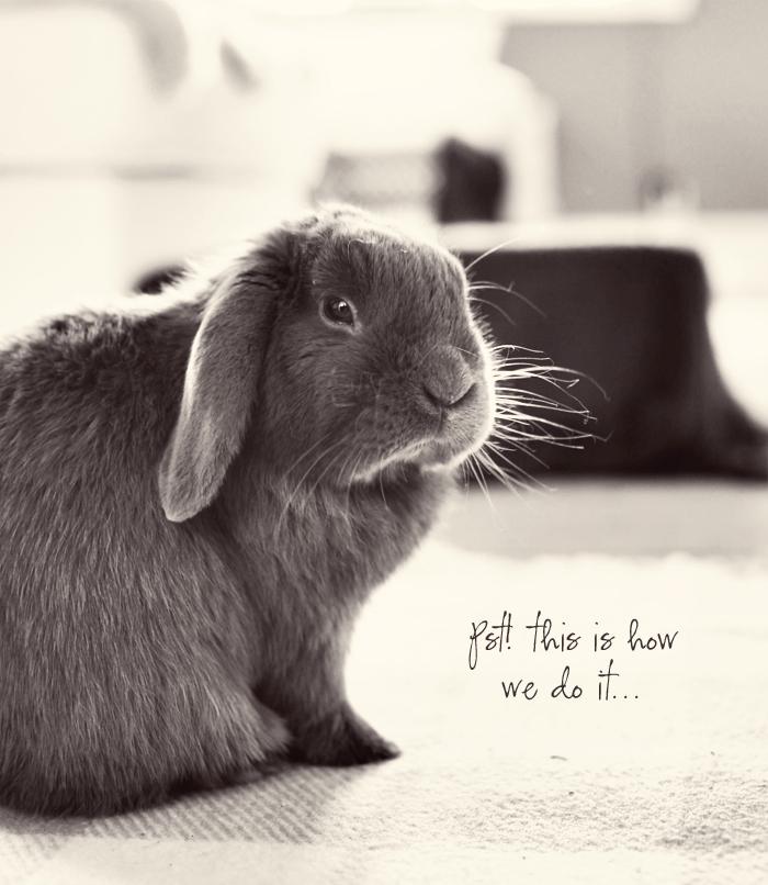 Albin kanin