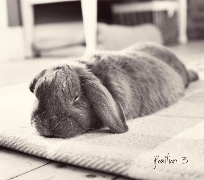 Albin kanin slappar