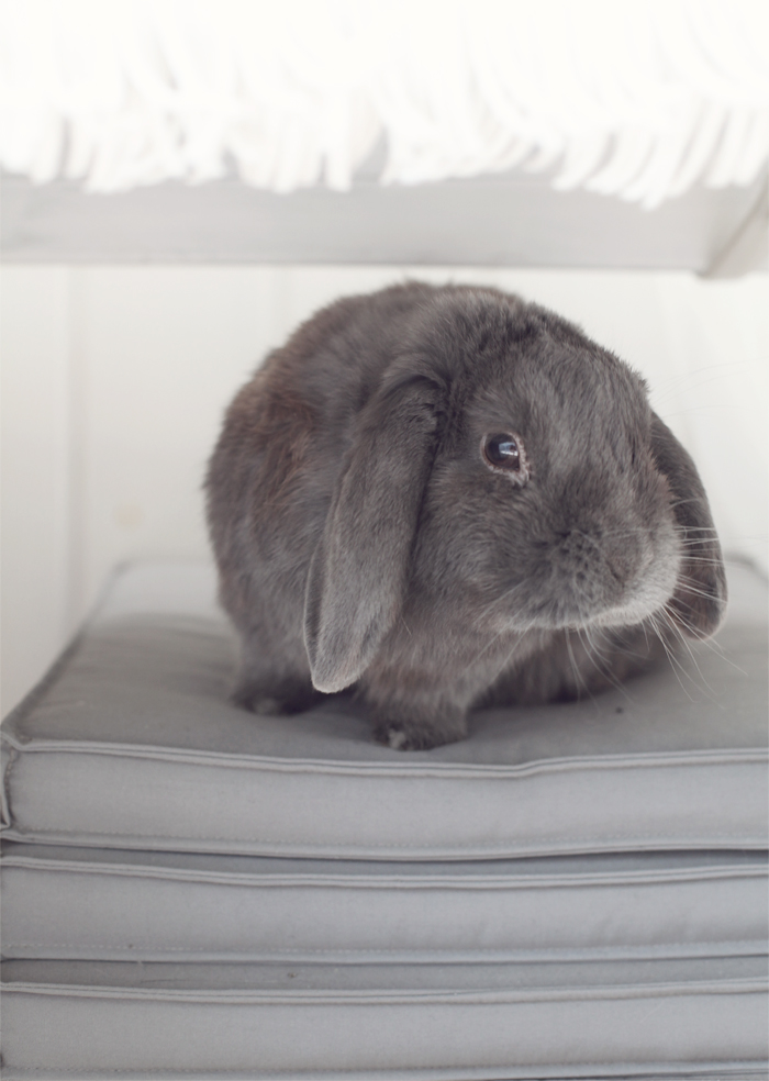 Albin under soffan