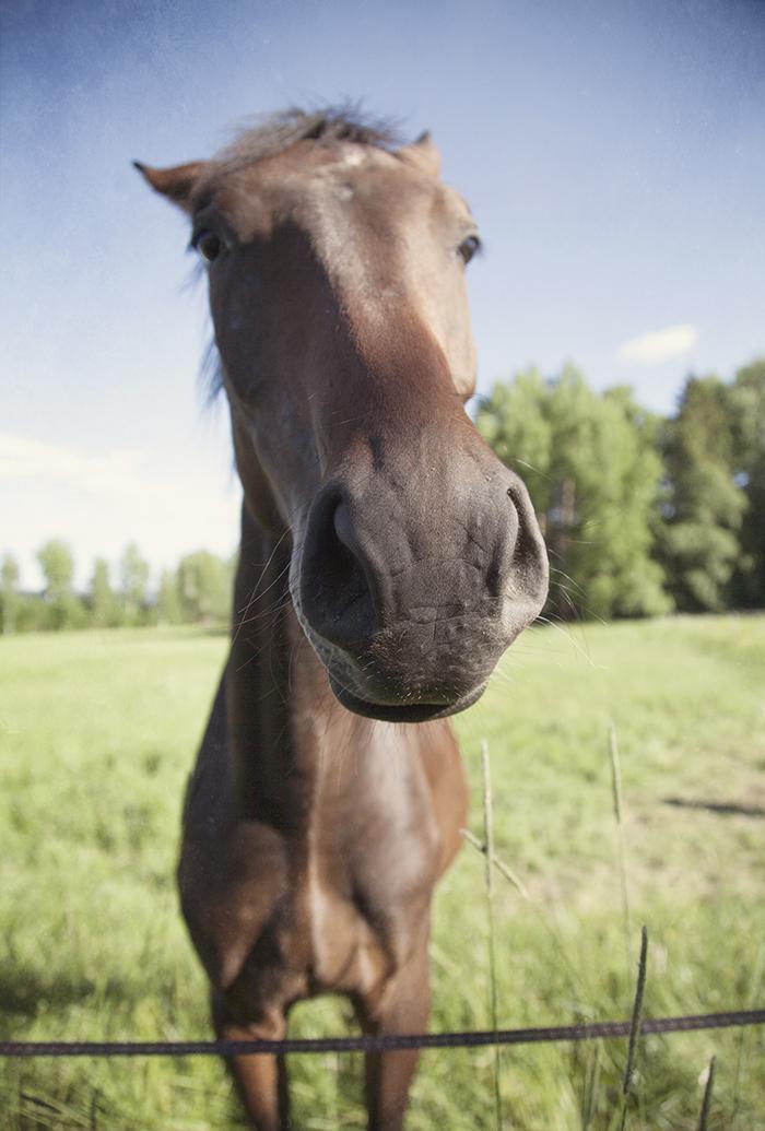 Extreme close up, horse