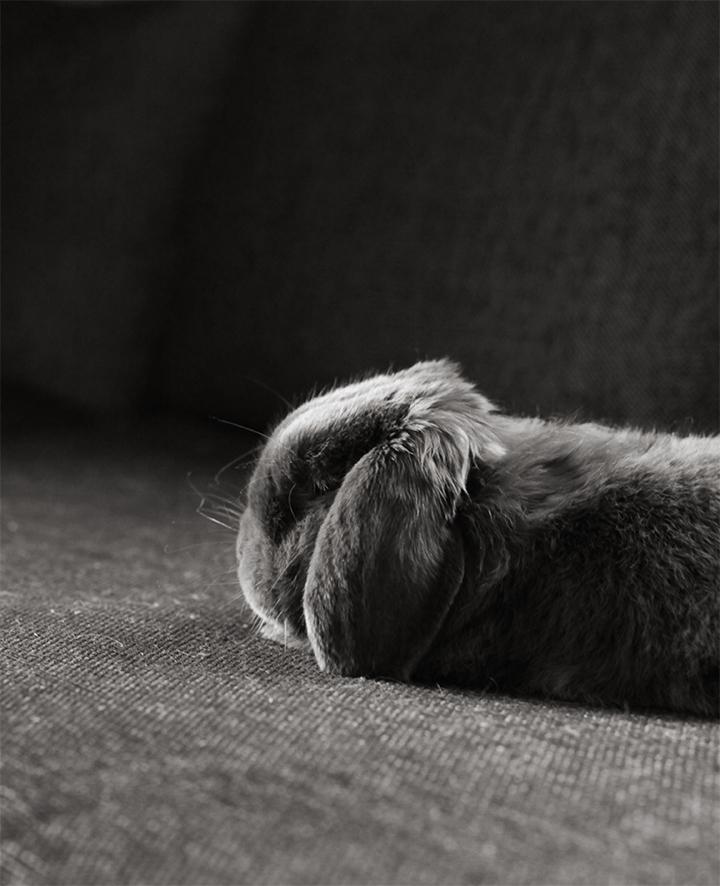 Albin i soffan