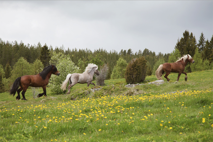 horses_02_small
