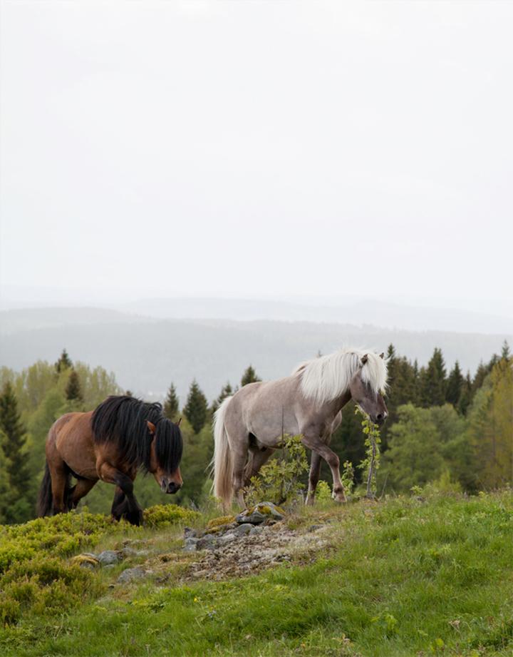 horses_04_small