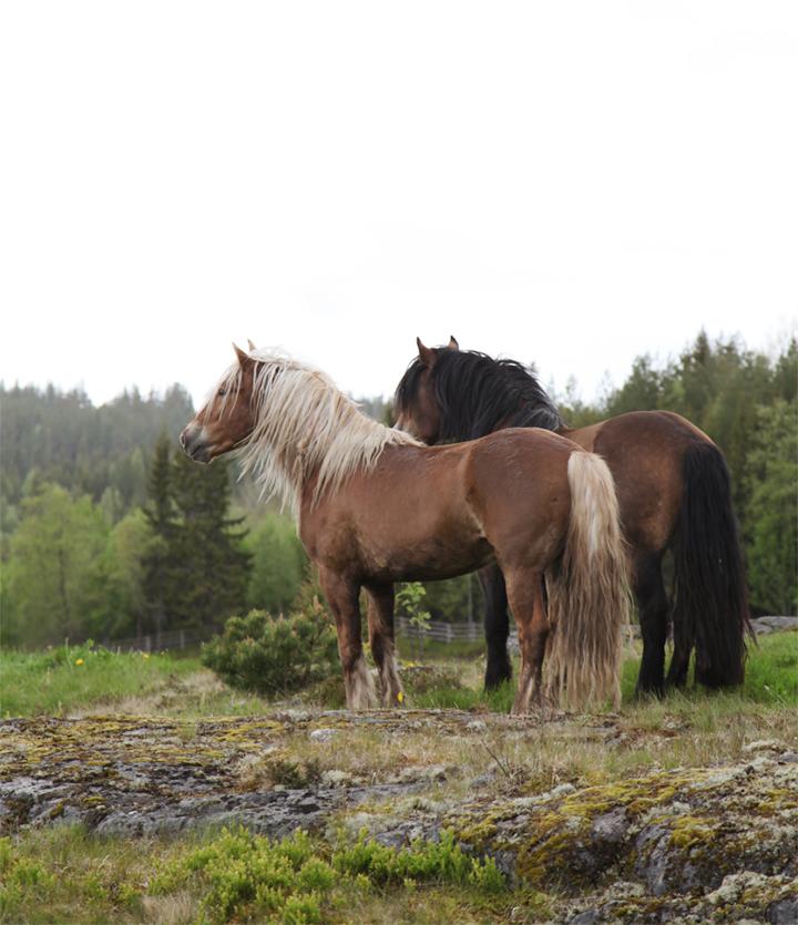 horses_05_small