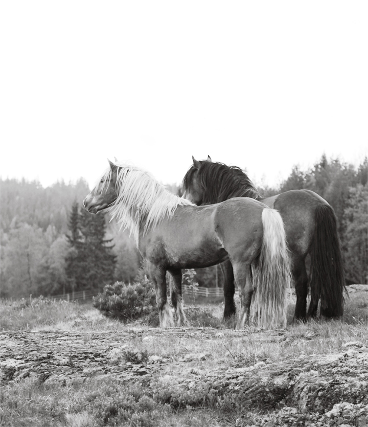horses_05_small_bw