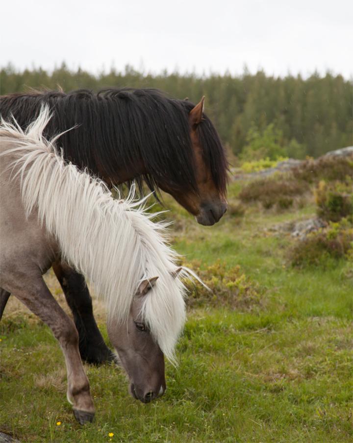 horses_06_small