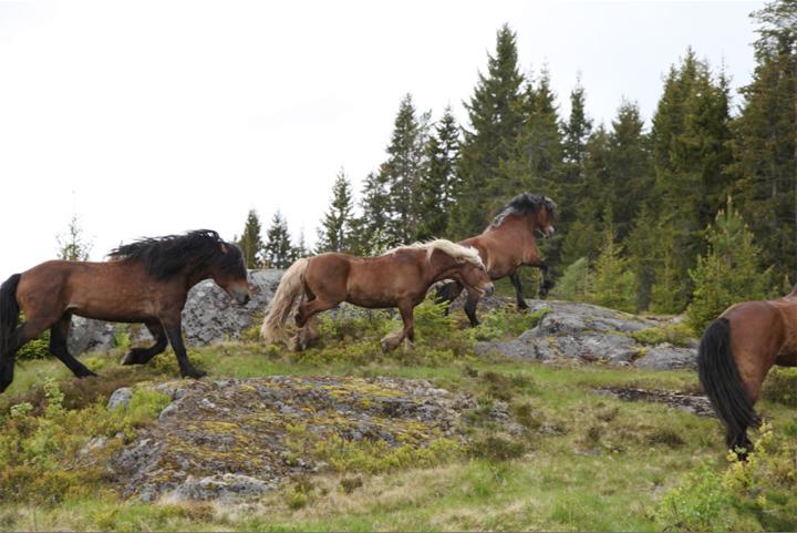 horses_07_small