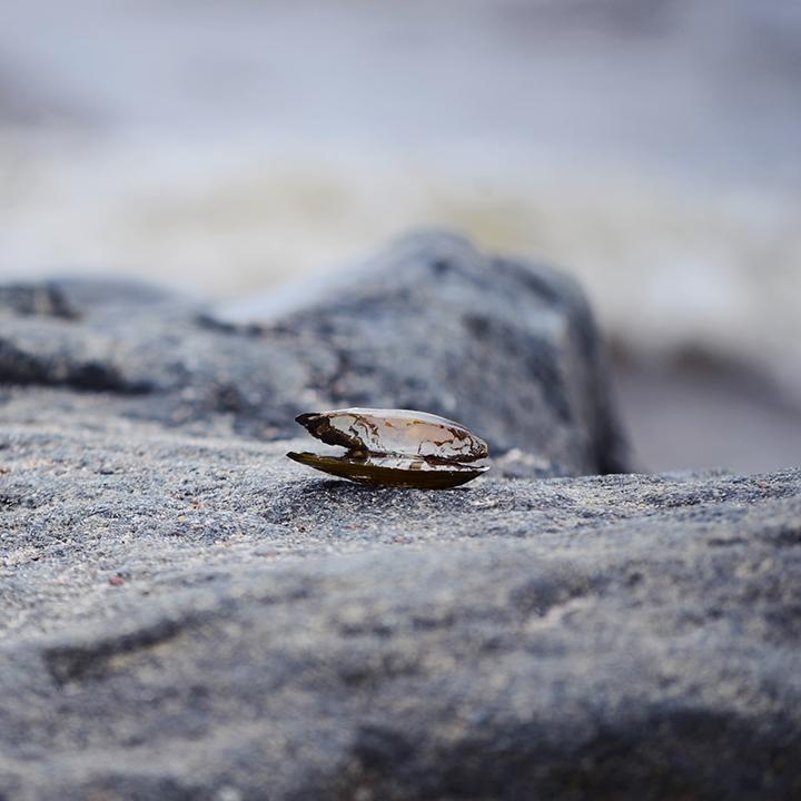 Rullsand_shell_720