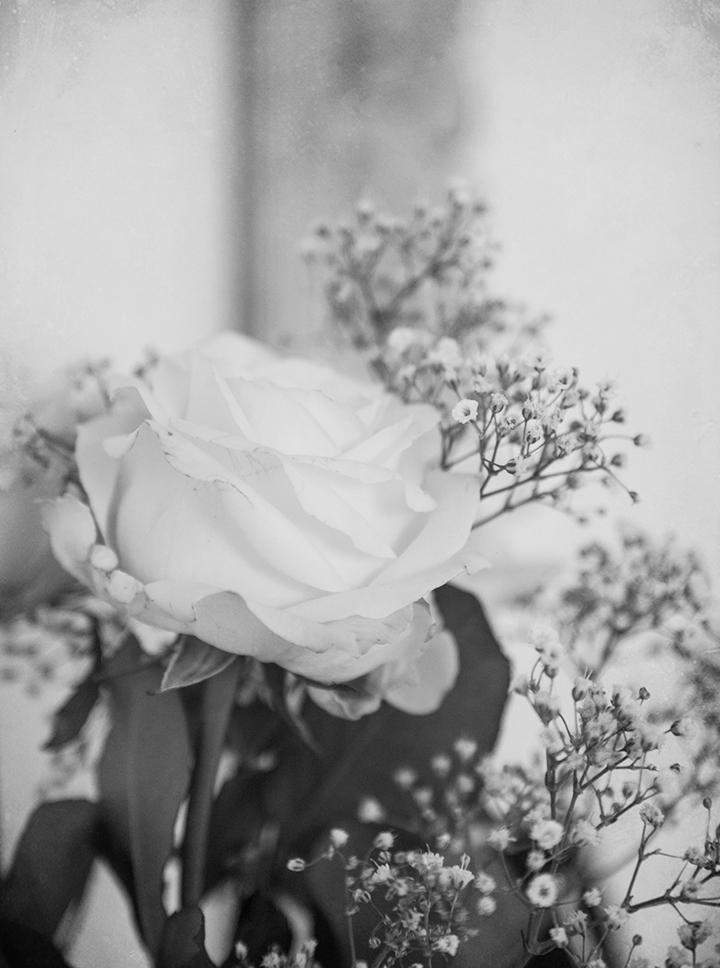 darling_roses