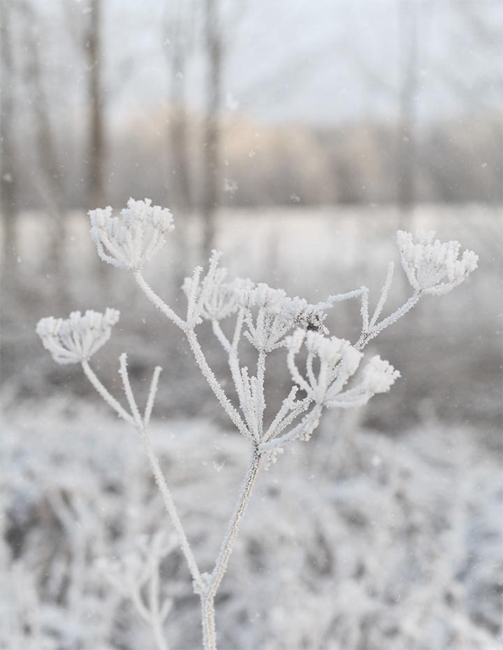 frosty_02