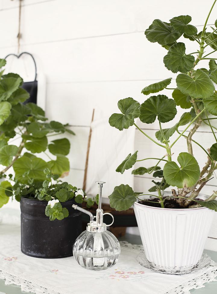 plants_1605