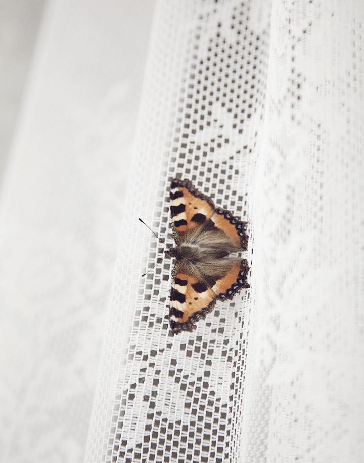 butterfly_1c