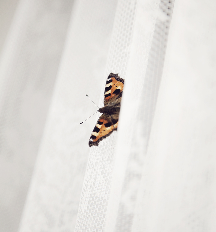 butterfly_2