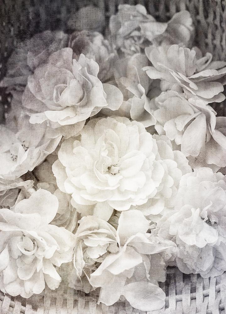 roses_160717