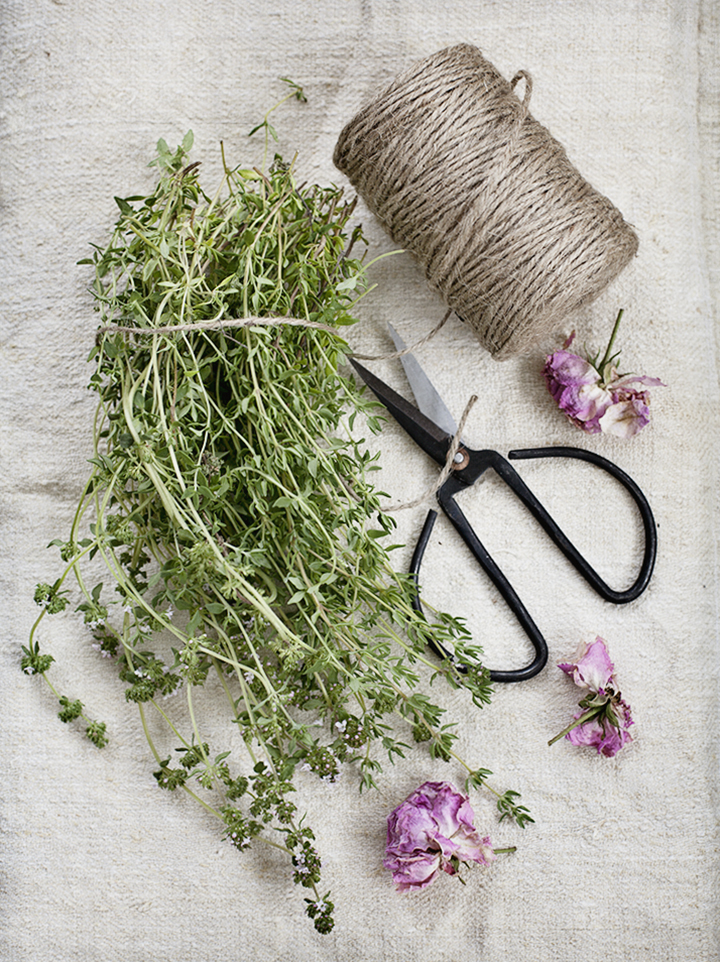 thyme_2_lo
