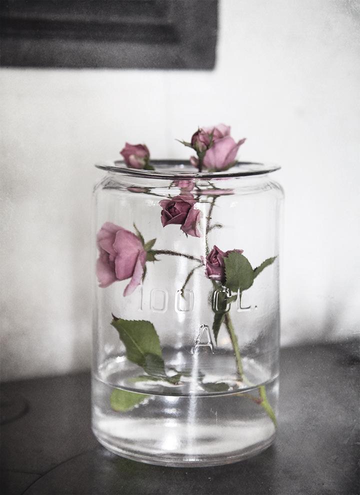 roseinajar