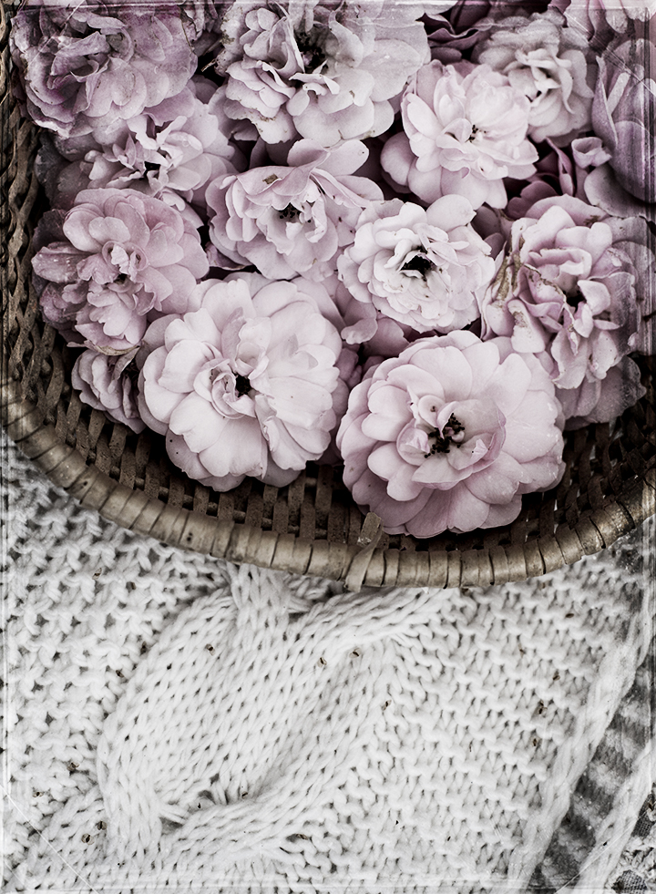 roses_in_basket_1
