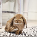 Bringing up a bunny
