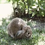 Kaninsommar