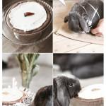 Konsten att fira en kanin